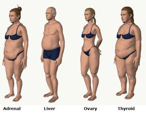 Body Types Weight Loss