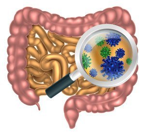 Intestinal Health and Weight Loss Probiotics