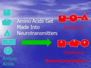 Amino Acids into Neurotransmitters