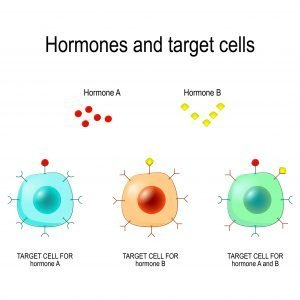 hormone receptor damage
